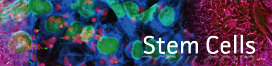 stem cells enews