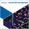 Download our Neural Cell Culturing Guide