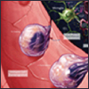 Coming Soon! Interactive Pathways for Platelet Activation