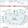 9 New Interactive Pathways for Platelet Activation