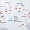 Explore Cancer Pathways from R&D Systems