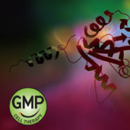 GMP Proteins