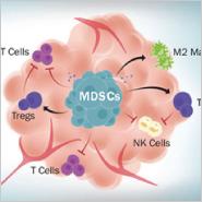 Targeting MDSCs