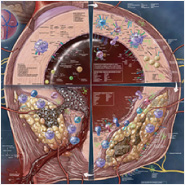 Is TREM2 a Novel Microglia Ab Receptor?