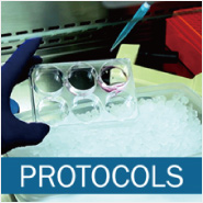 Protocols and Technical Tips for Organoid & 3-D Cultures