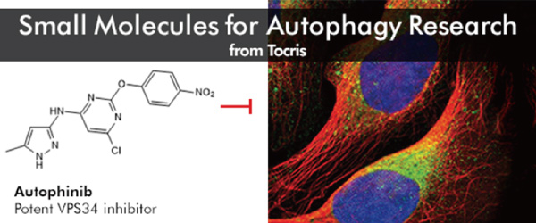 Small Molecules for Autophagy Research - from Tocris