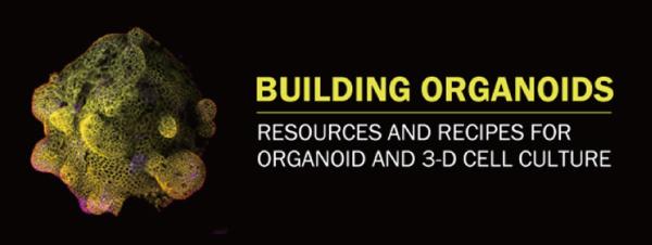 3 Ways to Improve Organoid Health