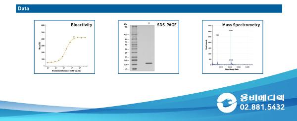 GMP, GMP protein, Cell Therapy, IL-2 GMP